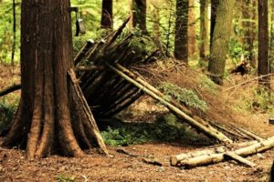 Woodland Survival and Bush Craft Course