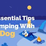five essential tips for camping with your dog
